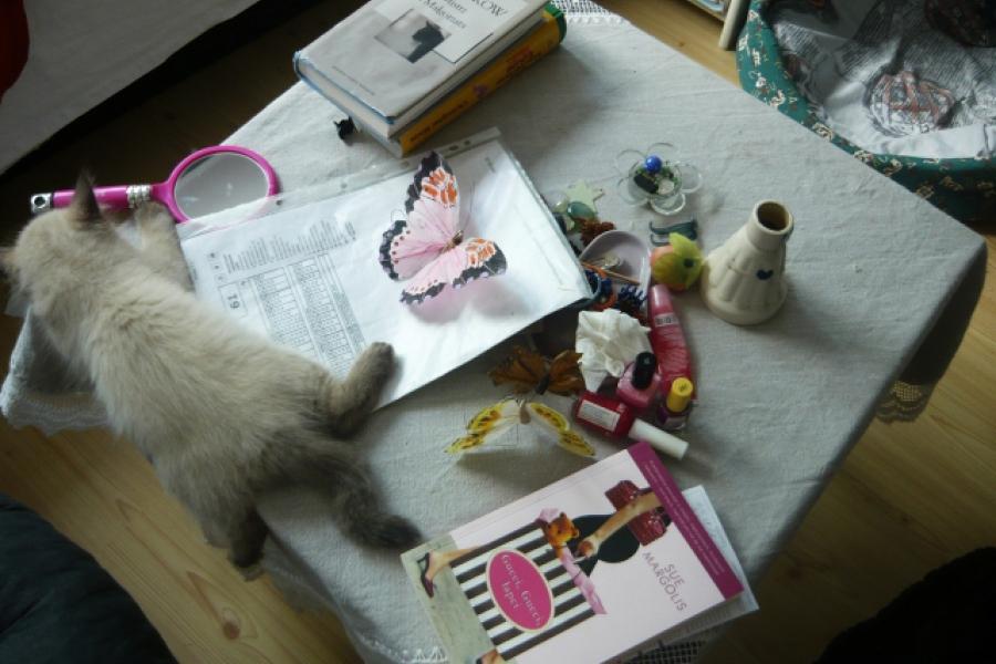 Kocie dopełnienie artystycznego nieładu...