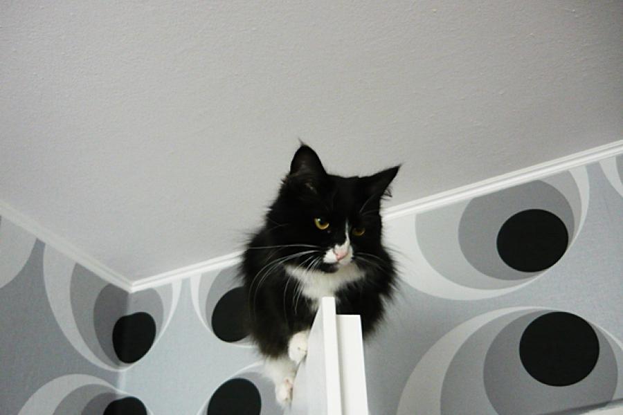 Kot, czy małpka?